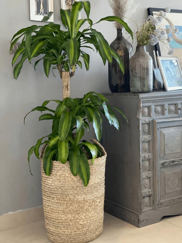 Desert Totes Planter Basket